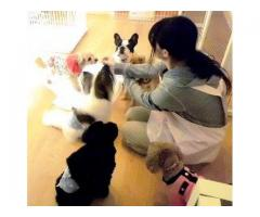 4月OPEN!西神戸に犬の幼稚園が新規開園!お留守番している時間を、お友達作りや暮らしのマナーを学びながら楽しく過ごそう♪