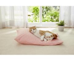 老猫介護のために。熟睡を追及した猫専用「たまくら体位変換クッション」を発売。(ペット用品の通販ショップ PEPPY)